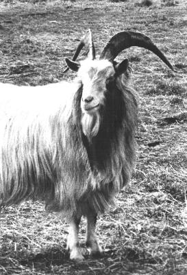 1967: De Prinselijke Plaatsvervanger